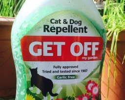 My war on cats