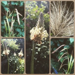 Gorgeous Summer Grasses