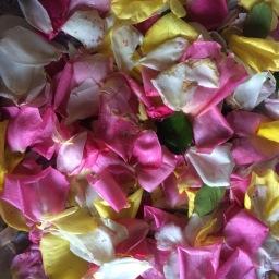 Potpourri petals