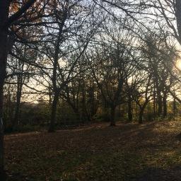 Autumn 🍂 walks