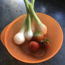 Spring Onions & Strawberries 🍓